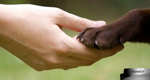 سنگدلیهای معصومانه، فقر فرهنگ رفتار با حیوانات