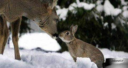 همهی حیوانات برابرند