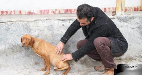 از نجاست تا خشونت سگ