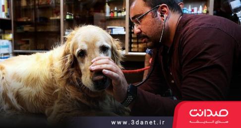 غذارسانی به سگهای ولگرد نه تنها لطف نیست، بلکه ظلمی در حق حیاتوحش است