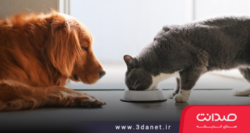 نقدی به نوشتار اینستاگرامی حسین آخانی دربارهی غذا دادن به حیوانات
