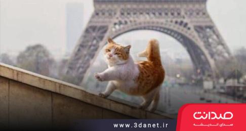 بیانیهی حقوق گربههای آزاد