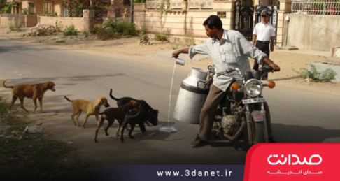 بازاندیشی در رابطه با کنترل جمعیت سگها و گربهها از طریق محدودسازی منابع غذایی